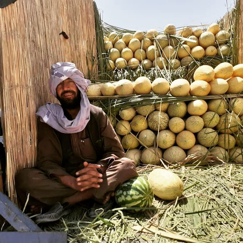 Nimroz Melon Yields have  increased well!