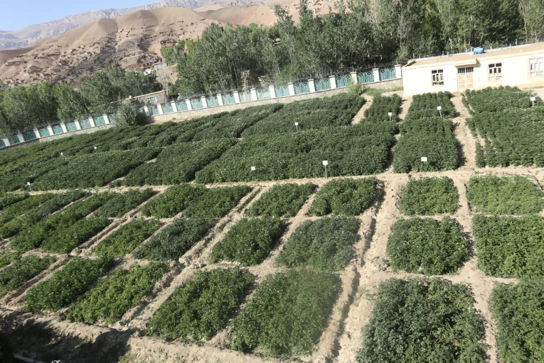 Mullaghulam Research Farm - Bamyan
