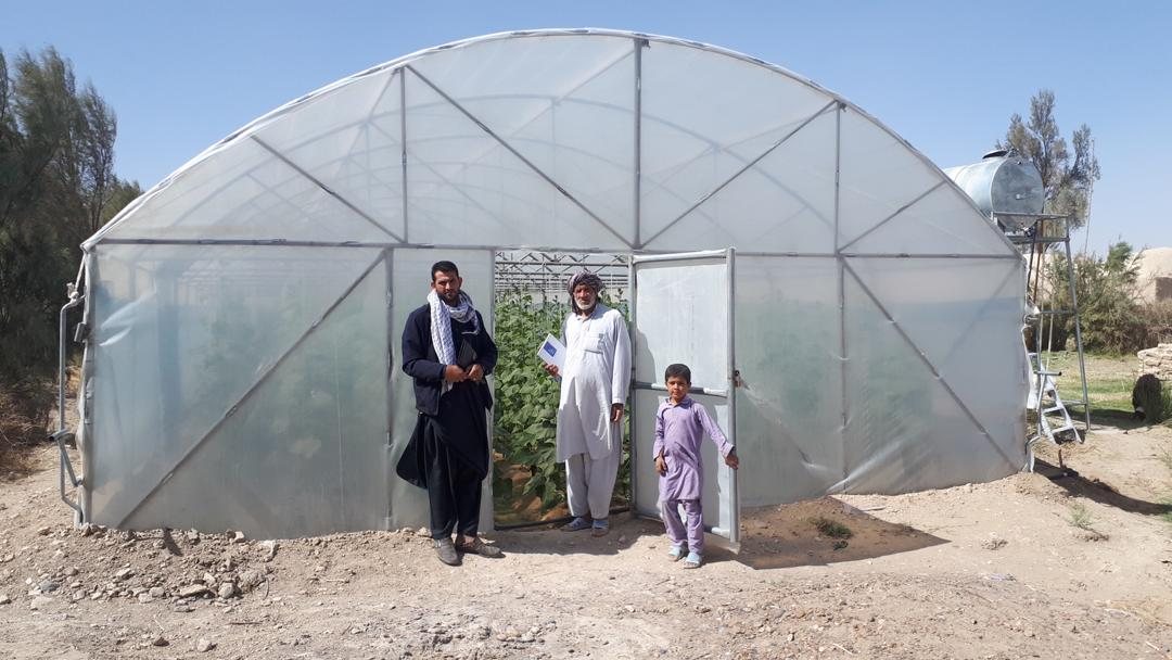 GreenHouse's  Crops in Nimroz province