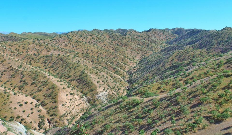 کار ساخت ۲۴ هزار مترمکعب بند محافظتی کوچک (چکدم) در جنگلزارها تا پایان امسال تکمیل میشود