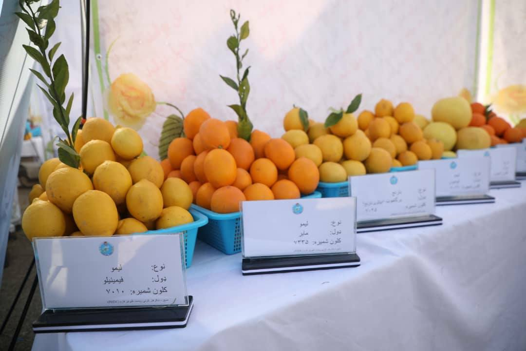 Domestic products in Nangarhar agricultural exhibition