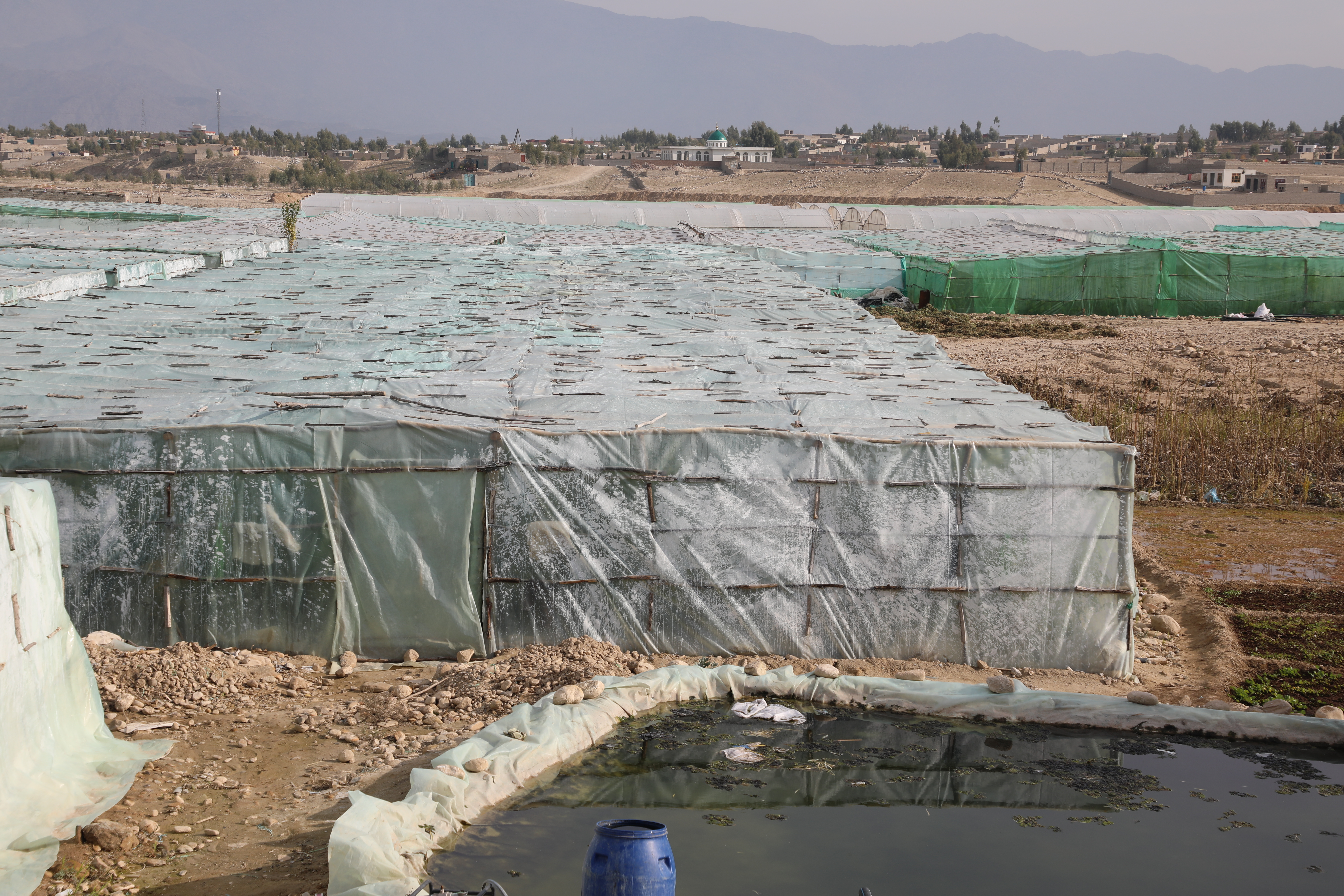 Greenhouses of tomatoes in capital of Laghman Province