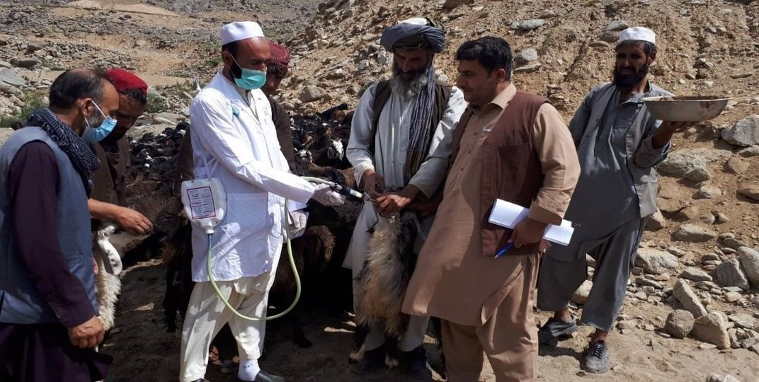 More Than 200,000 animals of Nomadic have been treated in Kabul