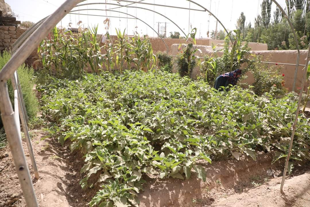 13,490 Home gardens to be built in 19 provinces