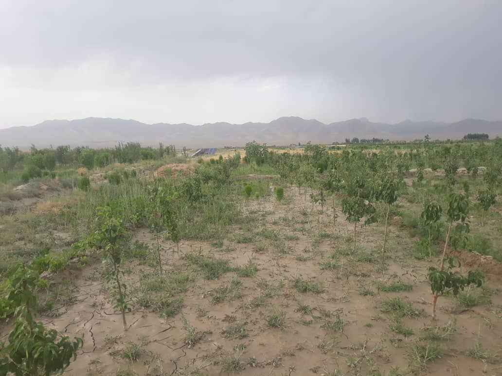 This year, 443 Acres of new Gardens were built in Ghazni