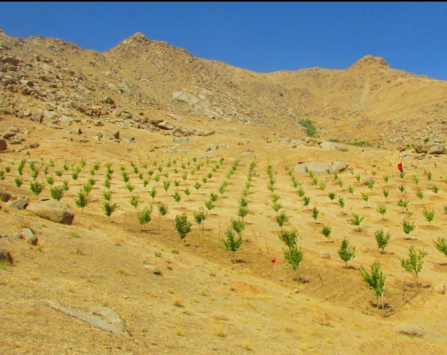 The first phase of Daikundi Valley Natural Resources Management Project completed